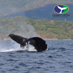 Ocean Safari Whale Watching