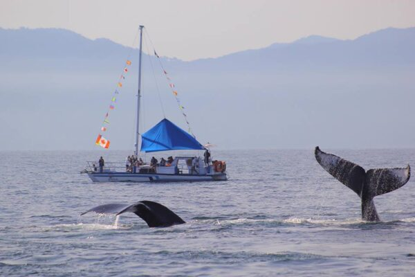 Fun and Whales